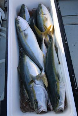 西岡遊漁の2020年9月28日(月)4枚目の写真