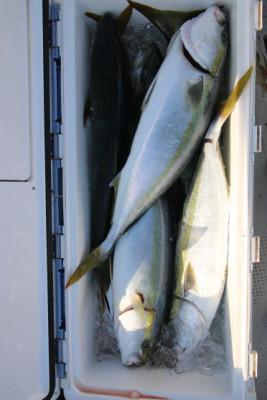 西岡遊漁の2020年9月28日(月)5枚目の写真