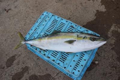 釣り船 魚英の2020年10月5日(月)5枚目の写真