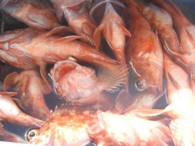 釣具の海友の2020年10月11日(日)2枚目の写真