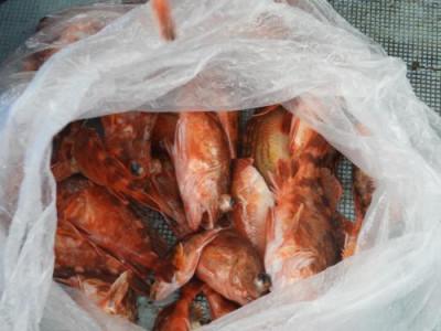 釣具の海友の2020年10月11日(日)3枚目の写真
