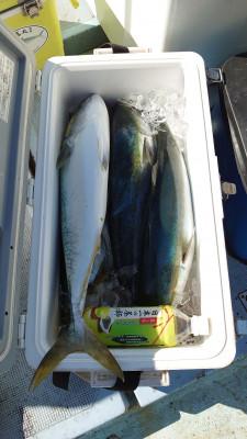 釣り船 秀進丸の2020年10月12日(月)3枚目の写真