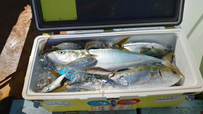 釣り船 秀進丸の2020年10月12日(月)4枚目の写真