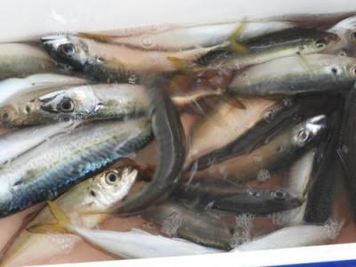 釣具の海友の2020年10月16日(金)2枚目の写真