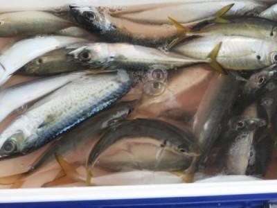 釣具の海友の2020年10月16日(金)3枚目の写真