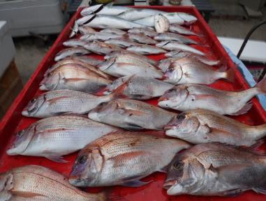 奥村釣船の2020年10月16日(金)5枚目の写真