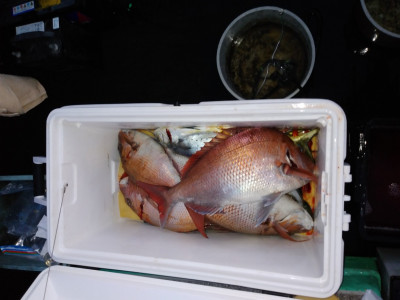 民宿釣舟 隆進の2020年10月18日(日)2枚目の写真