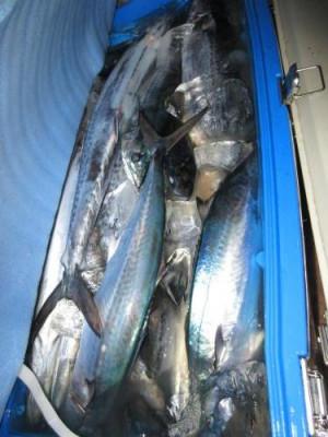 鈴木釣具店の2020年10月18日(日)3枚目の写真