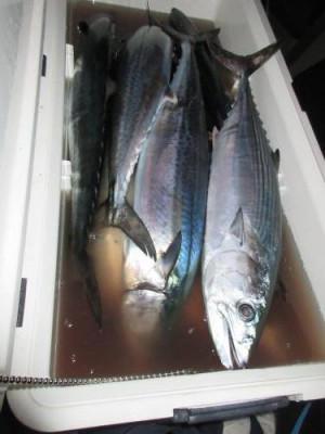 鈴木釣具店の2020年10月20日(火)3枚目の写真