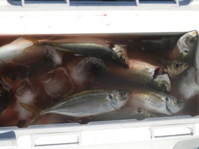 釣具の海友の2020年10月18日(日)5枚目の写真