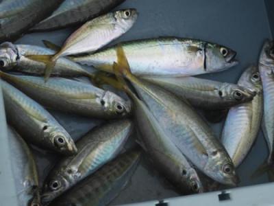 釣具の海友の2020年10月19日(月)2枚目の写真