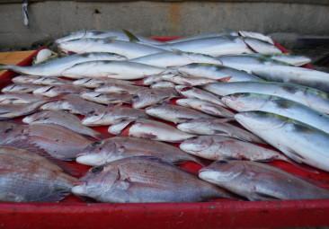 奥村釣船の2020年10月26日(月)4枚目の写真