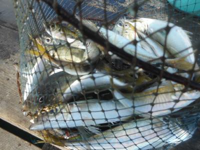 由良海つり公園&釣堀ランドの2020年10月30日(金)2枚目の写真