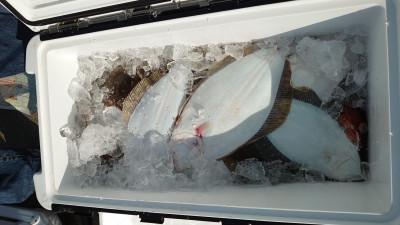 釣り船 秀進丸の2020年11月1日(日)2枚目の写真