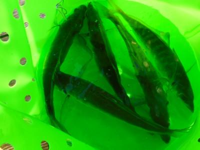 由良海つり公園&釣堀ランドの2020年11月17日(火)1枚目の写真