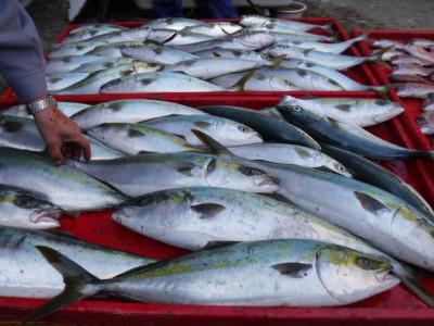 奥村釣船の2020年11月18日(水)4枚目の写真