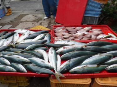 奥村釣船の2020年11月19日(木)5枚目の写真