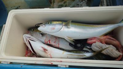 釣り船 秀進丸の2020年11月23日(月)3枚目の写真