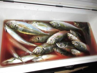 鈴木釣具店の2020年10月27日(火)2枚目の写真