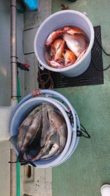 釣船 ちどりの2020年11月25日(水)3枚目の写真