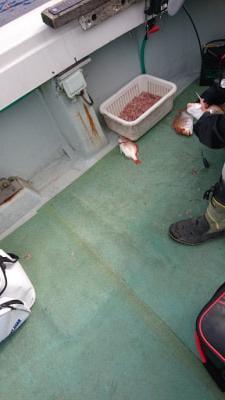 釣船 ちどりの2020年11月25日(水)4枚目の写真