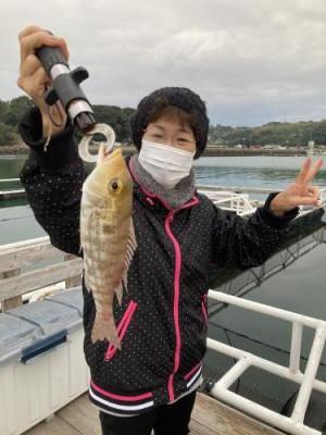 阿久根シーパークの2020年11月25日(水)5枚目の写真