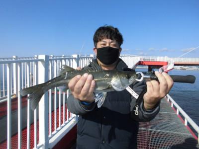 尼崎市立魚つり公園の2020年11月27日(金)2枚目の写真