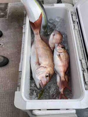 龍宮丸の2020年11月25日(水)2枚目の写真
