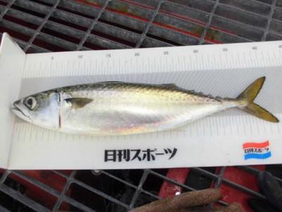 尼崎市立魚つり公園の2020年11月29日(日)4枚目の写真