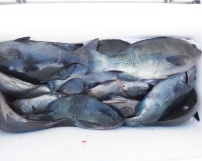 丸銀釣りセンターの2020年11月23日(月)4枚目の写真