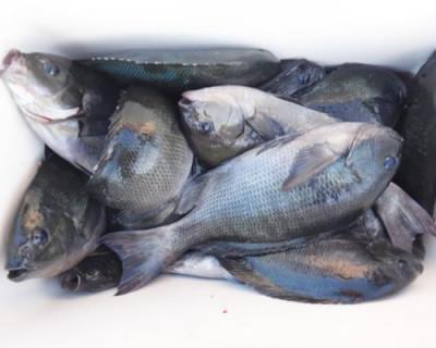 丸銀釣りセンターの2020年11月23日(月)5枚目の写真