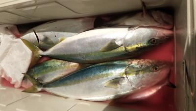 遊漁船ビックボーイの2020年12月2日(水)3枚目の写真