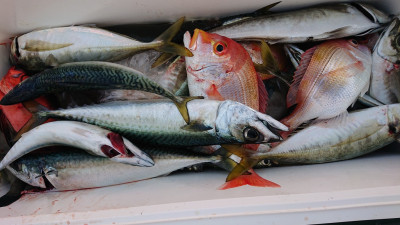 釣船 ちどりの2020年12月6日(日)3枚目の写真