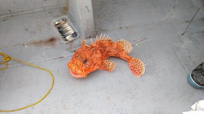 遊漁船ビックボーイの2020年12月12日(土)3枚目の写真