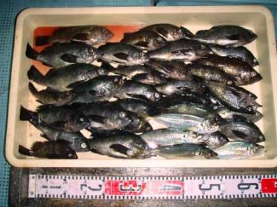渡船 朝日丸の2020年12月12日(土)1枚目の写真