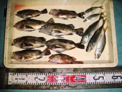 渡船 朝日丸の2020年12月12日(土)5枚目の写真