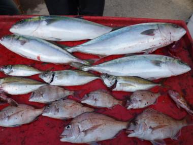 奥村釣船の2020年12月14日(月)4枚目の写真