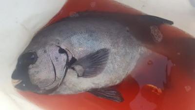 乙島丸の2020年11月4日(水)3枚目の写真