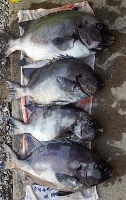 乙島丸の2020年11月10日(火)1枚目の写真