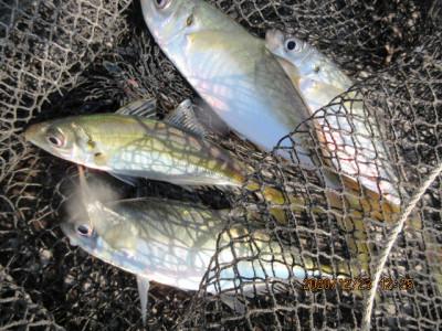 由良海つり公園&釣堀ランドの2020年12月23日(水)1枚目の写真