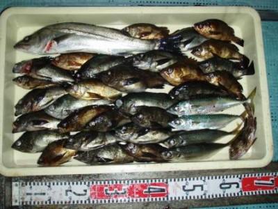 渡船 朝日丸の2020年12月26日(土)2枚目の写真