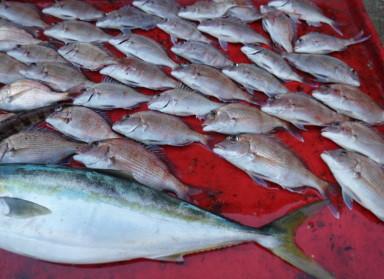 奥村釣船の2020年12月27日(日)4枚目の写真