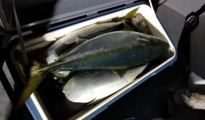遊漁船ビックボーイの2020年12月27日(日)4枚目の写真