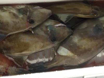 釣具の海友の2020年10月25日(日)2枚目の写真