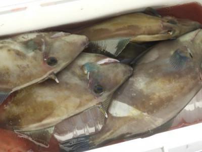 釣具の海友の2020年10月25日(日)5枚目の写真