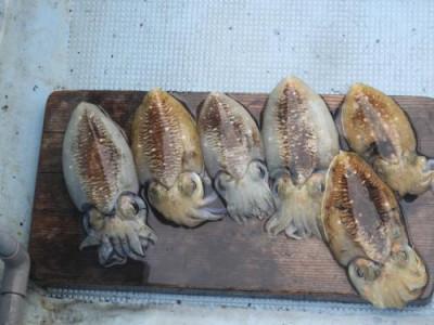 釣具の海友の2020年10月28日(水)1枚目の写真