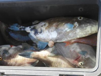 釣具の海友の2020年11月9日(月)4枚目の写真