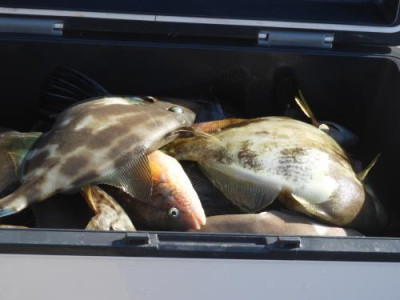 釣具の海友の2020年11月9日(月)5枚目の写真