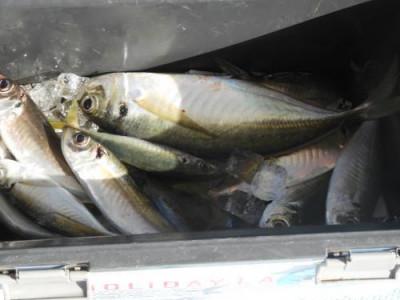 釣具の海友の2020年11月14日(土)2枚目の写真