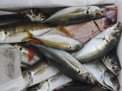 釣具の海友の2020年11月16日(月)3枚目の写真
